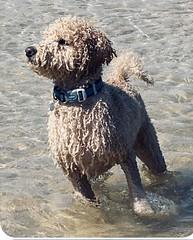 Buddy loving the water
