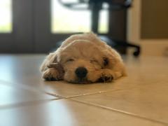 Murphie taking a nap