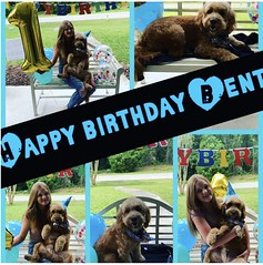 Happy Birthday Bentley