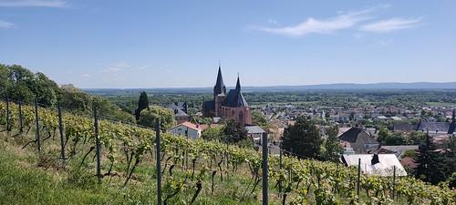 Katharinenkirche Oppenheim (Oppo Reno 2, Volbild, 1x, 2,82 MB)