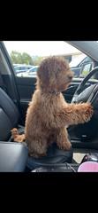 Teddy I'll drive