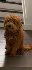 Teddy I'm cute
