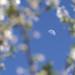 Blossom / Цветение