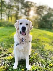 Sunshine walks