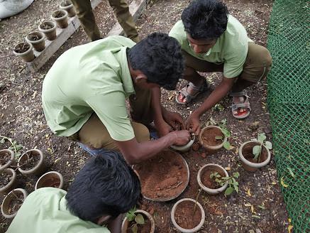 Transplanting of Vegetable seedlings
