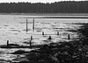 Tentsmuir Forest from Tayport