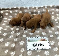 Darby Girls 5-9