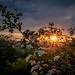 Sonnenuntergang im Naturschutzgebiet Albtrauf/ Baar