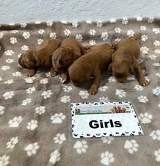 Darby Girls pic 2 5-9