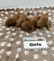 Darby Girls pic 3 5-9