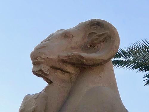 Égypte, Karnak (ancienne cité de Thèbes), Temple d'Amon, détail d'un sphinx criocéphale du dromos