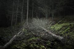 Photo of The Dark Woods