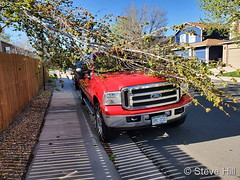 May 7, 2020 - Wind brings down a tree branch. (Steve Hill)