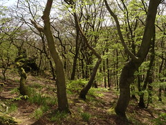 Forest in Early Spring