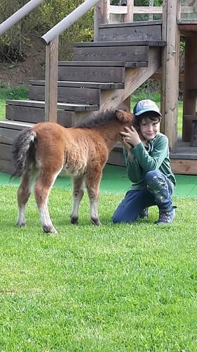 Der Pferdeflüsterer Clemens