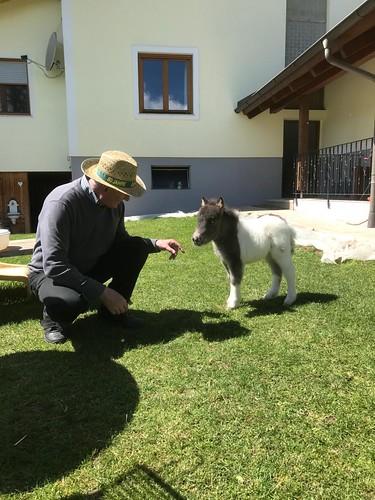 Opa hat bei der Pferdegeburt geholfen