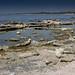 The Crusty Shore of the Salton Sea, California