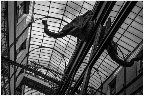 L'éléphant du passage du Grand Cerf - Paris