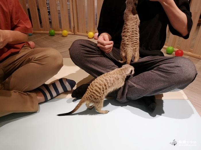 【台北中正】肉球森林|東門站最新主題餐廳|超療癒貓咪 狐獴 大嘴鳥 @魚樂分享誌