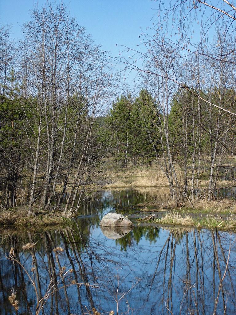 фото: Болота у реки Пышмы