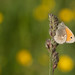 Butterfly on flower meadow