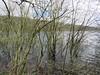 Damflask Reservoir, March 2020