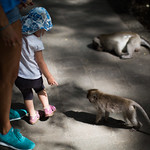 my daugther's first encounter with monkeys..