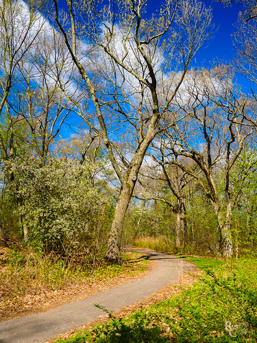 Spring Comes to Boston's Wilderness