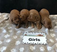 Darby Girls 5-15