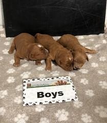 Baby Boys pic 2 5-15