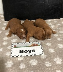 Baby Boys pic 4 5-15