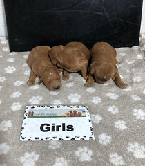 Baby Girls 5-15