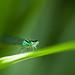 Eye love green! ;-)