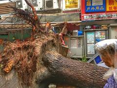 Typhoon Mangkhut, nature disaster, Tai Po, Hong Kong