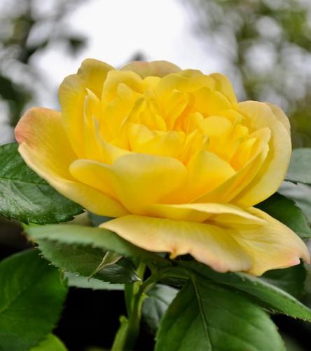 Spring 2020: rose