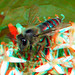 Bee Lumix Modified H-FT012 10+ 3D macro