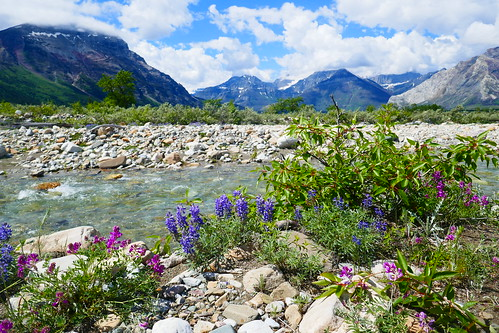PN Waterton Lakes - Wishbone Trail