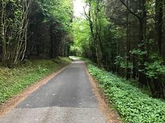 Photo of Woodland road