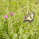 """Spread your wings <a style=""""margin-left:10px; font-size:0.8em;"""" href=""""http://www.flickr.com/photos/62259267@N04/49912128318/"""" target=""""_blank"""">@flickr</a>"""