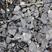 Solsville Shale (Middle Devonian; Morrisville North roadcut, Madison County, New York State, USA) 27