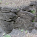 Solsville Shale (Middle Devonian; Morrisville North roadcut, Madison County, New York State, USA) 17
