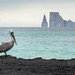 Pelican in Front of Kicker Rock
