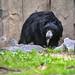 zoo_leipzig_0002