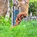 zoo_leipzig_0028