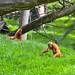 zoo_leipzig_0032