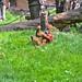 zoo_leipzig_0037