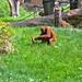 zoo_leipzig_0041
