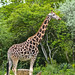 zoo_leipzig_0056