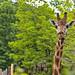 zoo_leipzig_0061