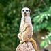 zoo_leipzig_0064